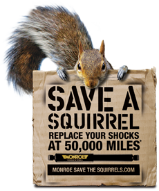 MONROE SHOCKS & STRUTS: Save A Squirrel